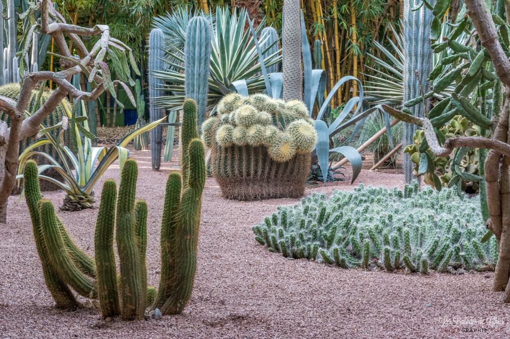 Cactées Jardin Marjorelle