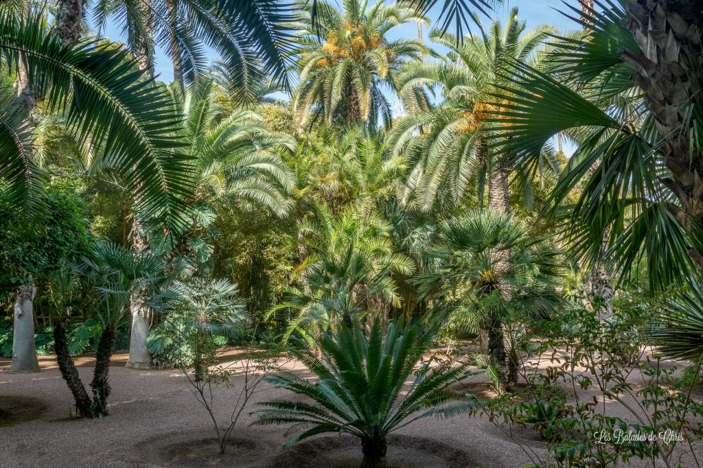 Palmeraie Jardin Majorelle